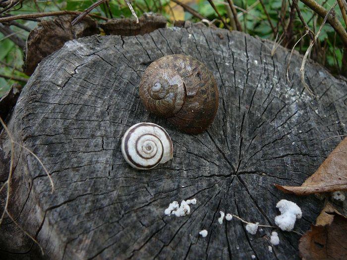 Shell Animal