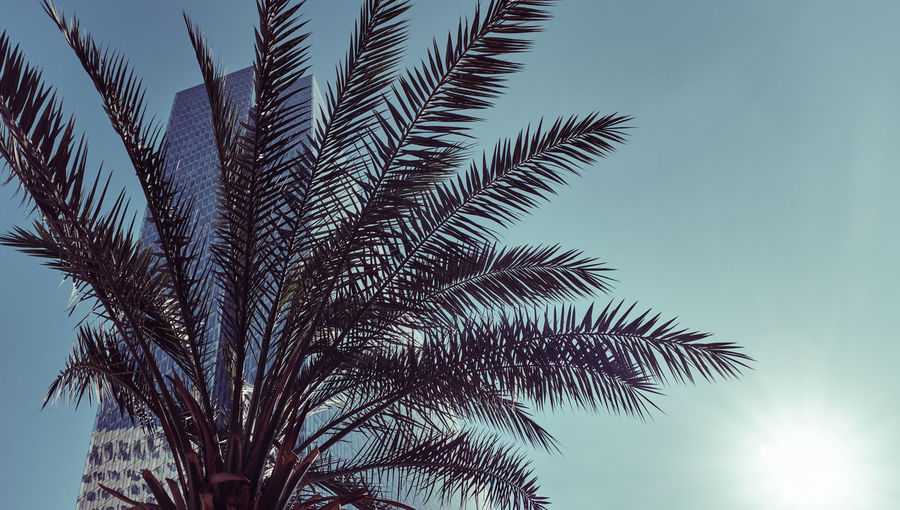 Low angle view of palm tree and building against sky