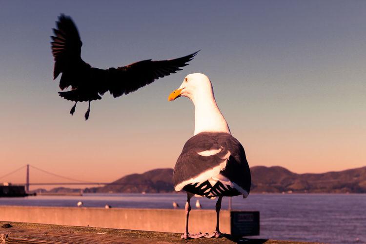 Birds against sky during sunset