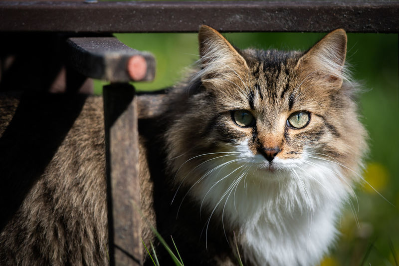 Close-up portrait of cat by outdoors