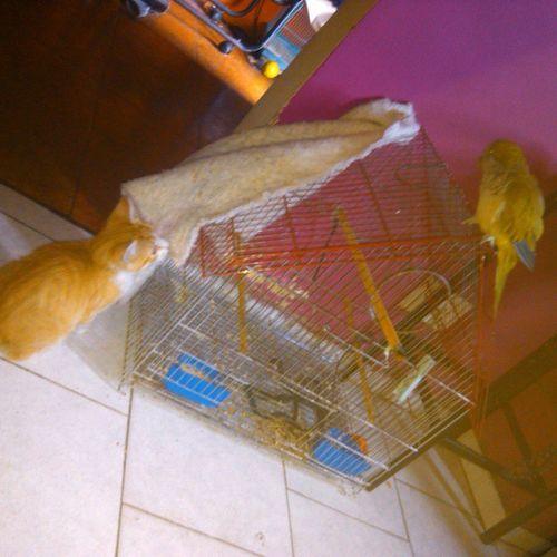 He Visto UN Lindo  gatito