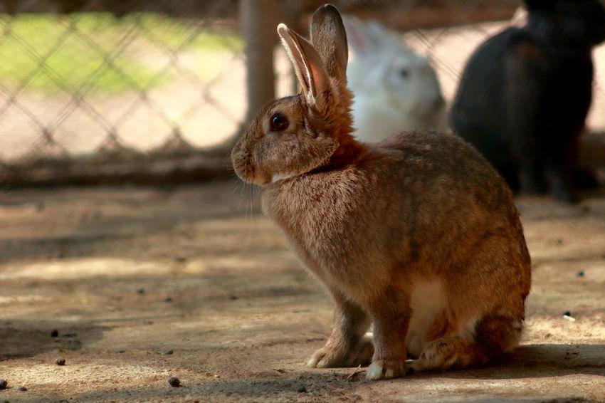 Animal Wildlife Brown Rabbit Nature No People One Animal Outdoors Rabbit Zoo Animals