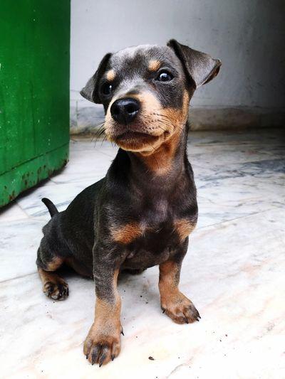 Dog Animals CuteanimalsPets Domestic Animals Animal Themes Sitting