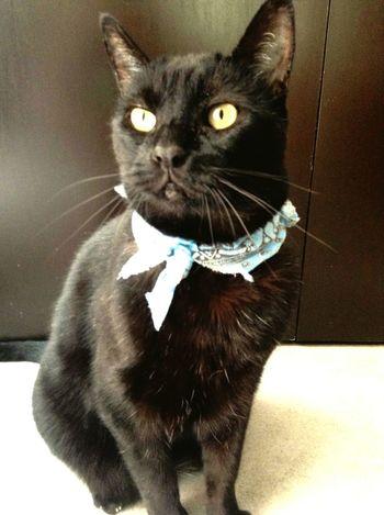 Tito... 😉 Cats Catsofinstagram Cat Lovers AdoptDontShop Adoptanocompres Vscocam Blackandwhite