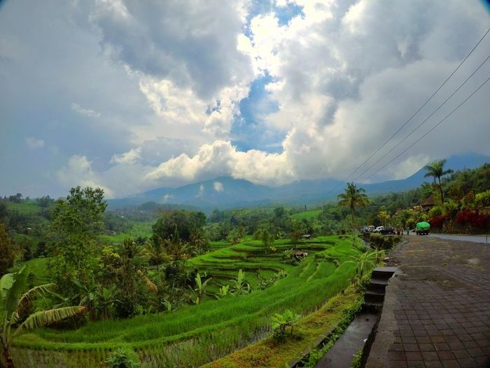 Jatiluwih, Bali. Morningview Morning Goodview Bali Jatiluwih Rice Terrace Tree Mountain Terraced Field Rice Paddy Tea Crop Agriculture Forest Sky Landscape Plant Plantation Rice - Cereal Plant Farm The Great Outdoors - 2018 EyeEm Awards