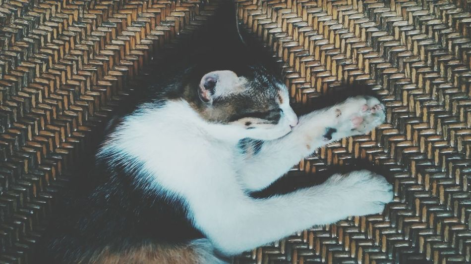 Pets Animal Themes Mammal One Animal Domestic Animals Domestic Cat No People Dog Indoors  Close-up Cage Day Cats Of EyeEm Cat Lovers Cat Photography Caturday