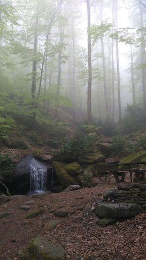 Outfoor Camping Kampmood Bench The Great Outdoors - 2018 EyeEm Awards EyeEm Selects Tree Water Fog Forest Sky Landscape Rainy Season EyeEmNewHere