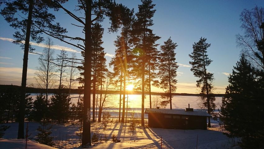 Sunset Tree Tourism Vacations Sky Nature Water Travel Destinations No People Outdoors Scenics Landscape Beauty In Nature Day Cold Temperature Finnland Inbtree Nature Young Women Beauty In Nature Nofilternoedit Nofilter Lost In The Landscape