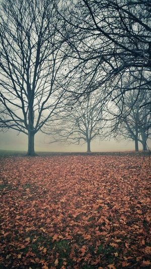 Bare Tree Change Field Fog Growth Landscape Learning Leaves Light Majestic Mystery Nature Nature No People Outdoors Peaceful Prospect Park Scenics Season  Tranquil Scene Tranquility Tranquility Tree