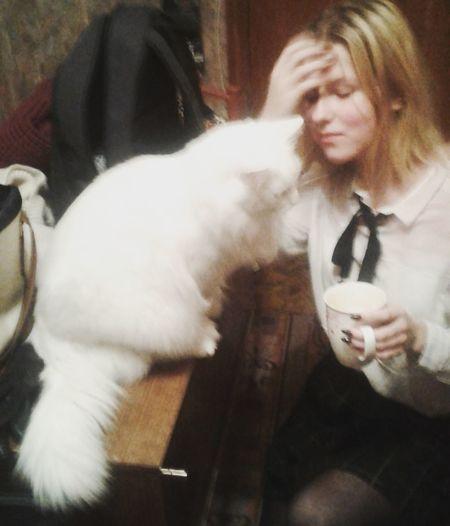 whitecat Cat