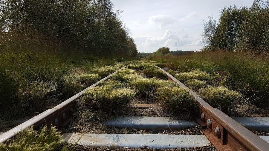 Himmelmoor peat