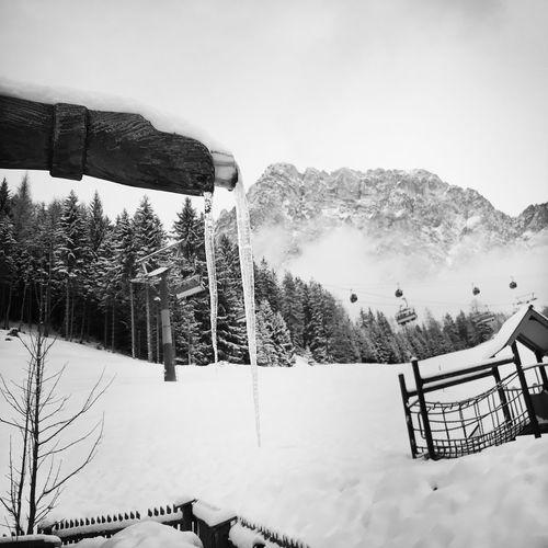 Tirol Ehrwald Winter Snow Cold Temperature Tree Mountain Nature Outdoors