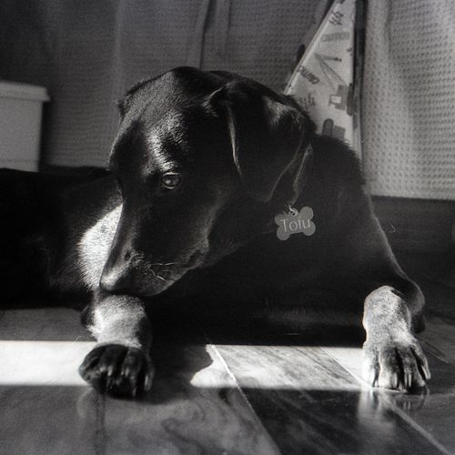 Dog Black And White Portrait Analog Monochrome Pet Film Photography Filmisnotdead Contrast Light And Shadow EyeEm Selects Indoors  Home Interior