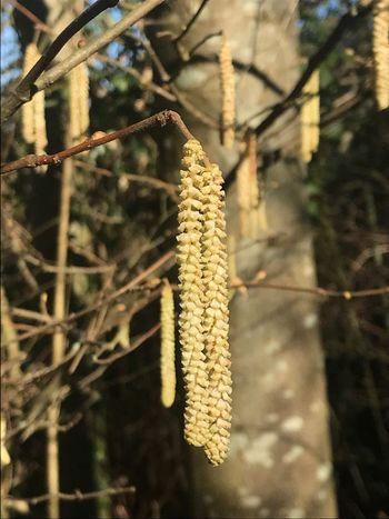 EyeEm Nature Lover EyeEmNewHere Catkin Day Focus On Foreground Cold Temperature Nature Outdoors Winter No People Beauty In Nature Close-up