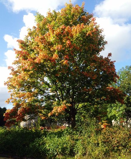 Nature On Your Doorstep Golden glory
