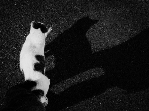 夜ねこ 野良猫 Stray Cat ねこ影