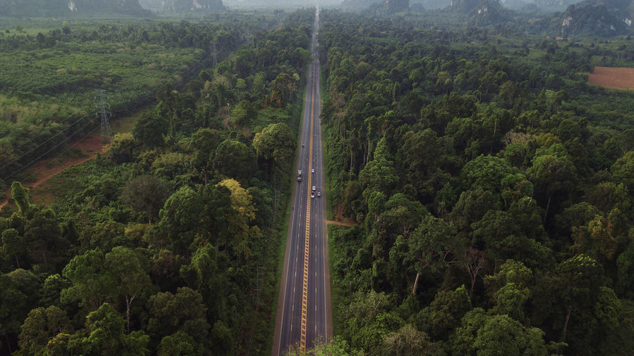 Tree Plant Transportation Road High Angle View Growth Forest Nature No People Green Color Beauty In Nature Day Scenics - Nature Landscape Environment Foliage Lush Foliage Outdoors Non-urban Scene Tranquil Scene