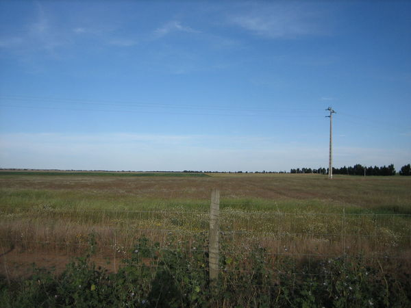 Beja 2006 Agriculture Beauty In Nature Clear Sky Day Electricity  Electricity Pylon Field Growth Landscape Nature No People Outdoors Rural Scene Scenics Sky Tranquil Scene Tranquility