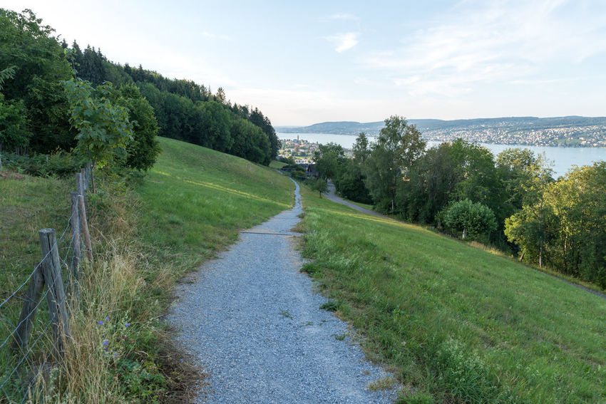 Zürichseerundweg Hiking Trail Waldweg Wanderweg Beauty In Nature Day Direction Environment Forest Track Fußweg Grass Green Color Growth Land Landscape Nature No People Outdoors Plant Road Scenics - Nature Sky Switzerland The Way Forward Track Trail Tranquil Scene Tranquility Transportation Tree