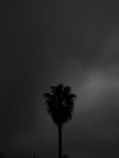 Welcome To Black Blackandwhite Outside Shadow Beauty In Nature Silhouette Dark Outdoors Day Tree EyeEmNewHere Sky Palm Tree One Black Animals In The Wild Darkness And Light Coconut EyeEm Best Shots Light And Shadow