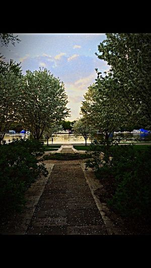 DTRW Downtownredwing Lake Breeze Trees Shadow Check This Out JunePhotoChallenge Relaxing Nature_collection Myhappyplace Happy