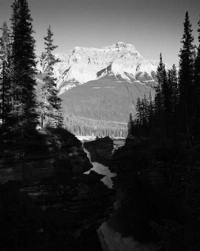 The Athabasca Falls in all their glory on a gorgeous Autumn day Athabasca Falls Canada Formidable Jasper National Park Monochrome Landscape Nature's Strength Portrait Format Sunny Day
