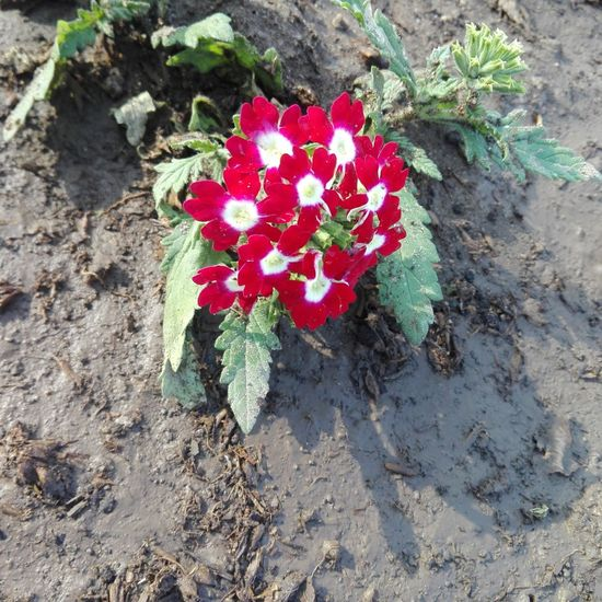 Red Nature Freshness Beauty In Nature Lima-Perú Sightseeing
