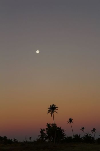 Moonset At Sunrise Moonset Moon Beauty In Nature Palm Tree Nature Scenics Tranquility Moon Silhouette Outdoors Sky Clear Sky