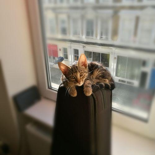 Happy kitty Pet Portraits
