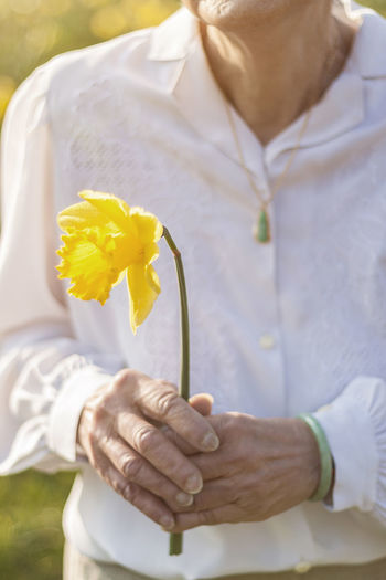 Midsection Of Senior Woman Holding Yellow Daffodil