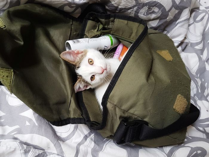 EyeEmNewHere Bag Cheecky Cute Kitten Cat In A Bag Pets Portrait Feline Domestic Cat Lying Down High Angle View Looking At Camera Kitten Young Animal Cat At Home Sack