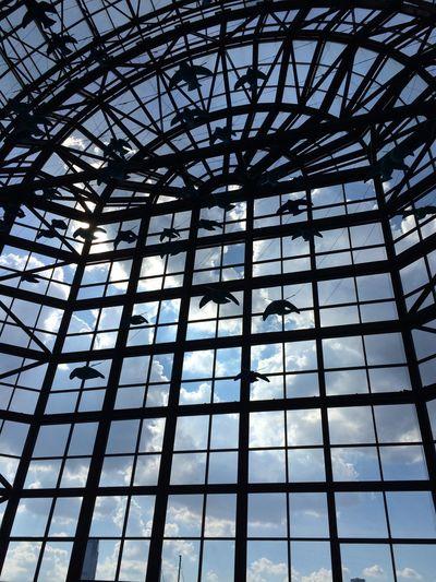 Window Windows Birds Le District NYC Clouds Sky
