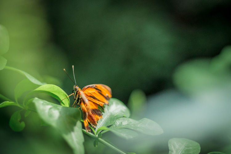 Beautyful  Butterfly Beauty In Nature Growth Flower Animal Themes Plant Fragility Insect Leaf One Animal Animals In The Wild Freshness Green Color No People Close-up Outdoors Blooming Pollination Day Flower Head