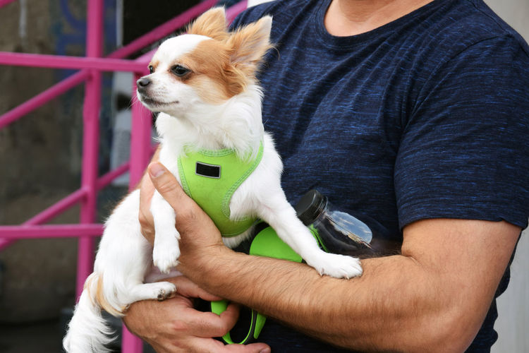 Midsection of man holding puppy
