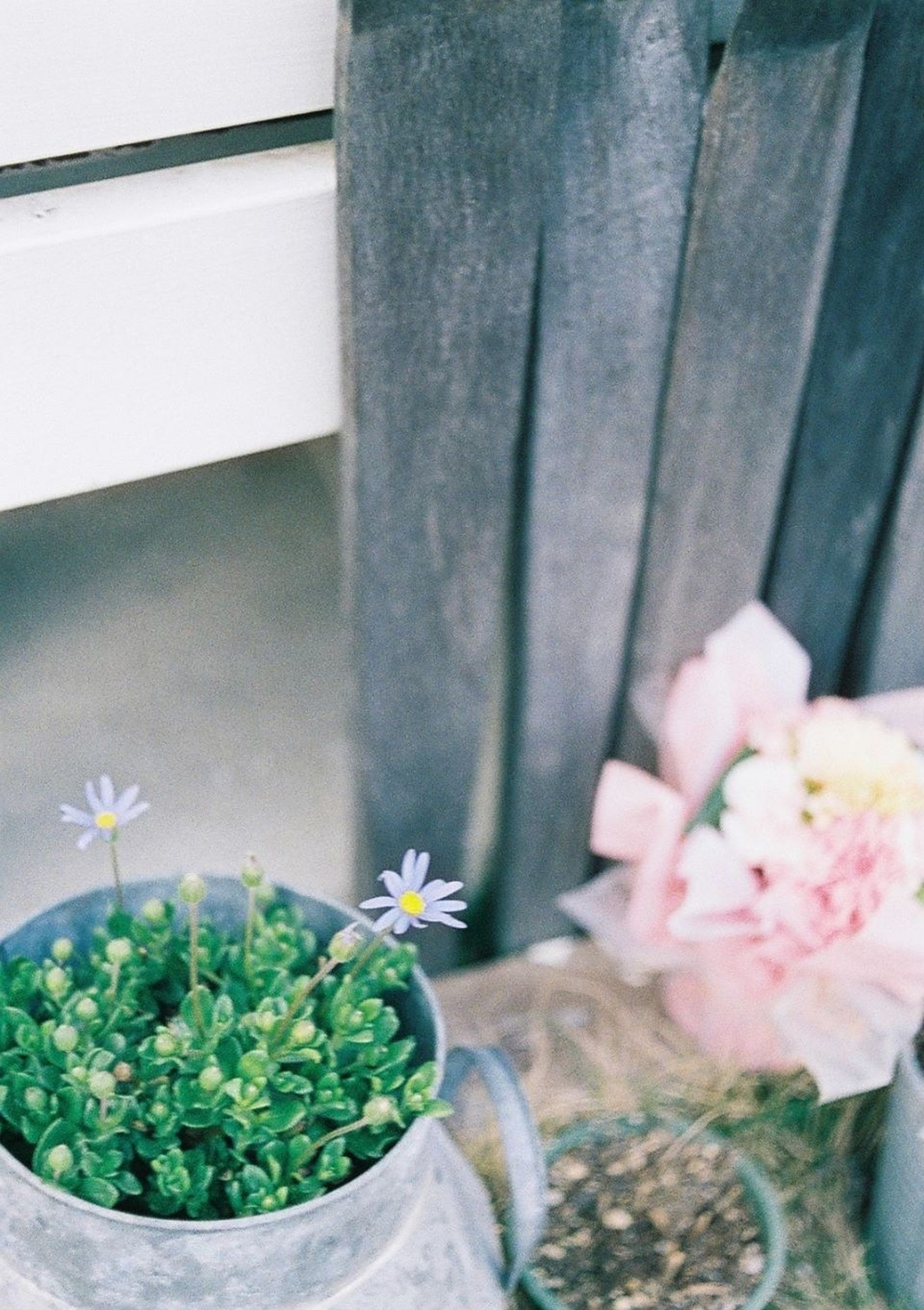 flower, plant, freshness, potted plant, fragility, growth, leaf, petal, flower head, close-up, nature, built structure, flower pot, beauty in nature, green color, wall - building feature, architecture, blooming, indoors, day