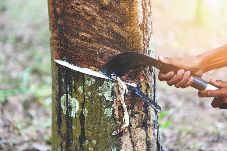 Close-up of hands cutting tree trunk