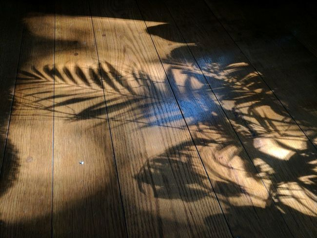 EyeEm Selects Shadow Backgrounds Indoors  Sunlight Plant Leaves Floor Plant Shadow Palm Leaves