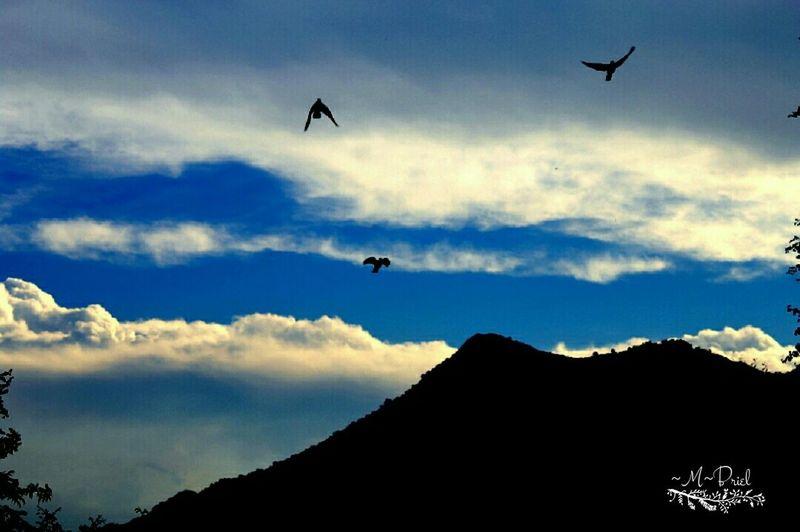 Mountain View Birds In Flight Blue Sky Mountain Silhuette