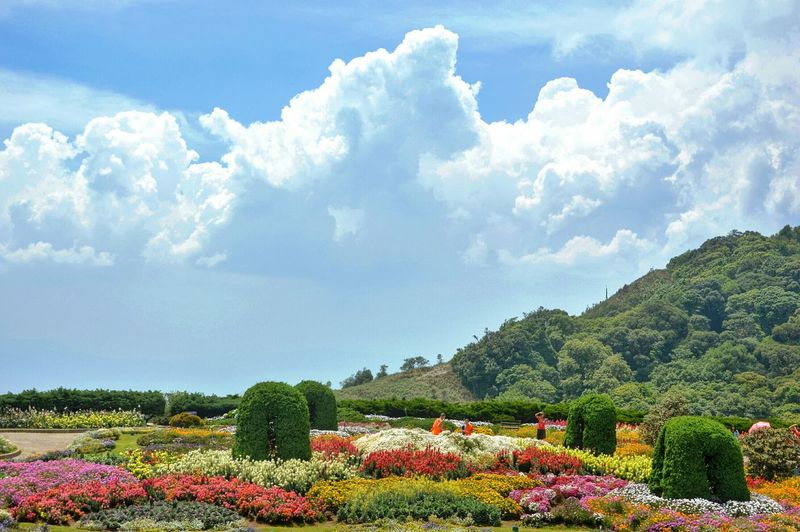 Scenic View Of Flower Garden Against Cloudy Sky
