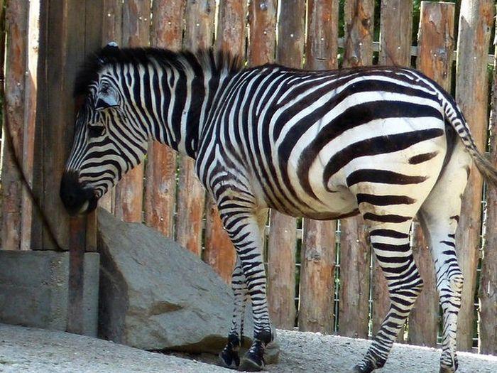 Heikobo Tiergarten Straubing Straubing Tiere