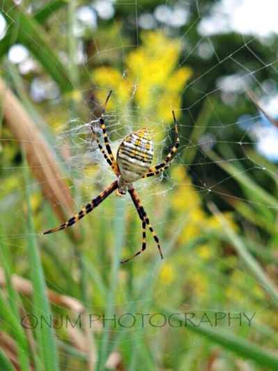 Ok... One more Spider just for fun. Sorry couldnt sleep so had to dig up some Classics Arachnid Photography Closeup