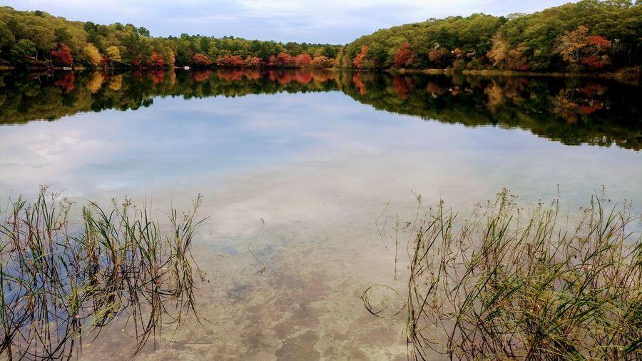Fresh Pond in