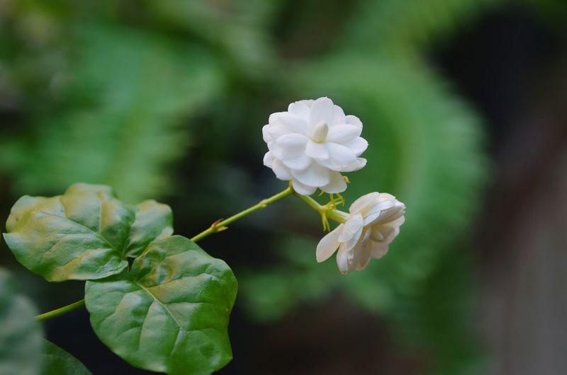 flower white Relaxing Enjoying Life Flowerlovers Flowerwhite Still Life Green Green Green!  Background Flower Photography