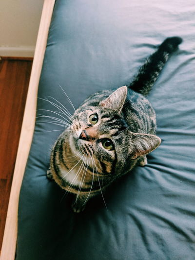 High angle portrait of cat on bed