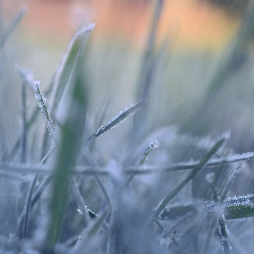 Frost Cold Winter No People Nature Plant Close-up Cold Temperature Winter Day Beauty In Nature Fragility Grass Freshness