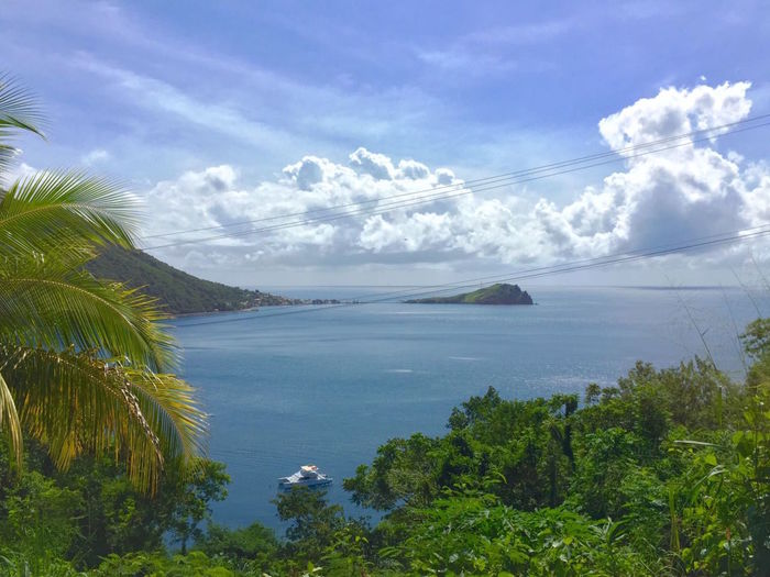 Beauty In Nature Cloud - Sky Day Dominica Growth Landscape Nature No People Outdoors Scenics Sea Sky Tranquil Scene Tranquility Tree Water
