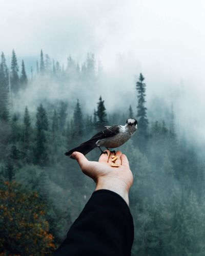 Low angle view of hand holding bird on land