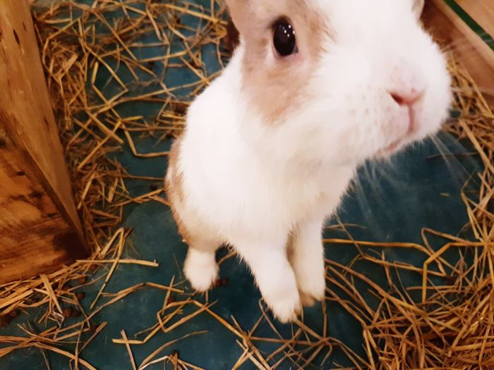Little bunny wants to selfie Hair Farm Cute Rabbit Bunny  Selfie ✌ Selfie✌ Beautiful Natural White Brown Eyes Lovely Nature Natural Standing Pet EyeEm Selects Pets Portrait Cage Cute Close-up Animal Themes Grass Straw Hay Rabbit - Animal Haystack Farmland