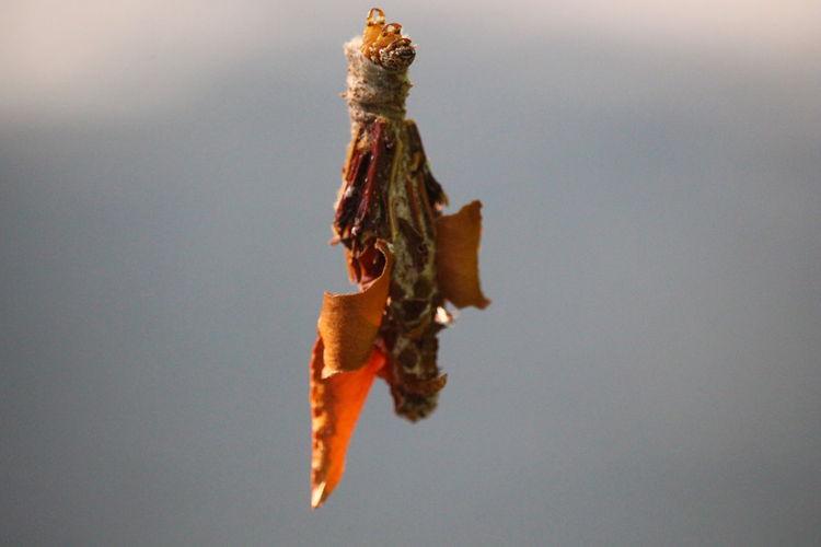 bagworm Close-up