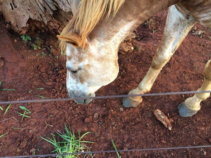 Brown horse at farm